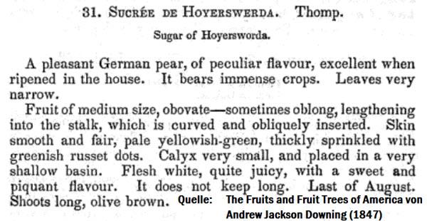 """Auch in den USA war die Birne unter dem Namen """"Sugar of Hoyerswerda"""" verbreitet und gefeiert."""