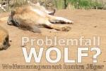 Problemfall Wolf? Wolfmanagement contra Jäger