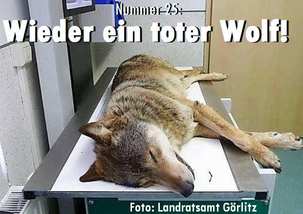 Nummer 25: Wieder ein toter Wolf!
