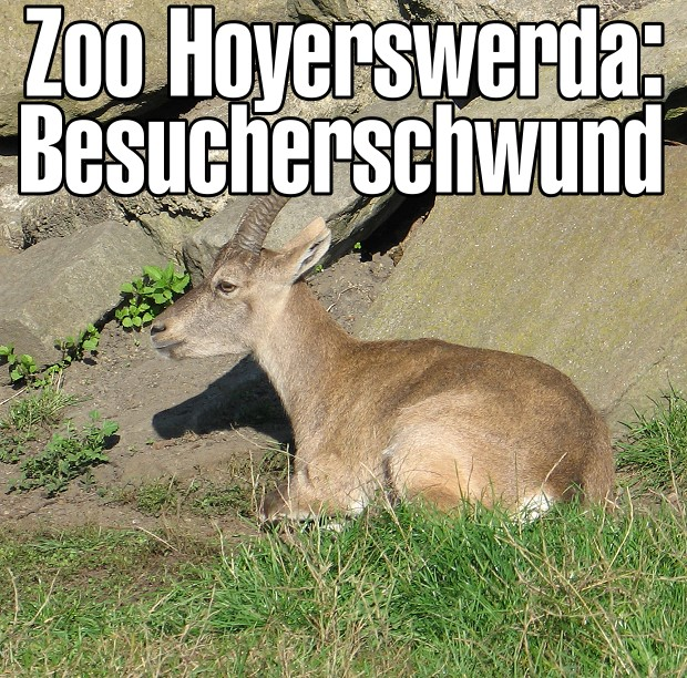Zoo Hoyerswerda: Besucherschwund